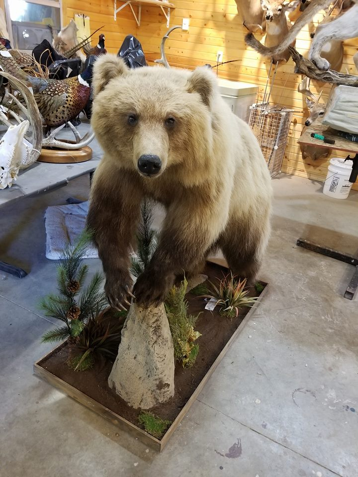 becky-bear