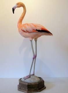 Cheri Guinn - Flamingo